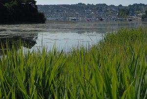 Estuary overlooking Falmouth