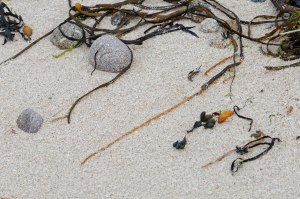 Photo of seaweed on St. Agnes, Isles of Scilly
